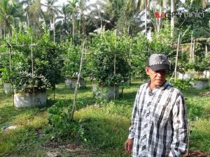 เกษตรกรหาดใหญ่เผยเคล็ดปลูกมะนาวออกผลดกลูกใหญ่ทำกำไรงาม