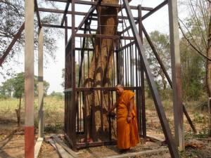พระ-ชาวบ้านสารคามผวามอดไม้ลอบตัดไม้พะยูงต้องสร้างกรงเหล็กล้อม