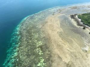 """นักวิทย์เผยพืดปะการังมรดกโลก """"เกรทแบริเออร์รีฟ"""" ฟอกขาวรุนแรงเป็นประวัติการณ์"""