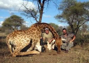 """คนรักสัตว์เดือด """"สตอยคอฟ"""" ล่าสัตว์ตายเป็นเบือที่แอฟริกา"""