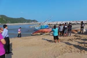 สลด! พบวาฬบรูด้ายาวกว่า 12 เมตร ลอยตายกลางทะเลคลองวาฬ