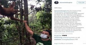 """คาด """"ลีโอนาร์โด"""" ไม่โดนแบนเข้าอินโดนีเซียหลังโพสต์โจมตีทำลายป่าเพื่อปลูกปาล์มน้ำมัน"""