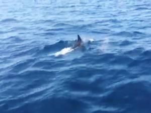 เฮ! ฝูงโลมากว่า 20 ตัว ว่ายน้ำโชว์นักท่องเที่ยวที่เกาะสิมิลัน จ.พังงา