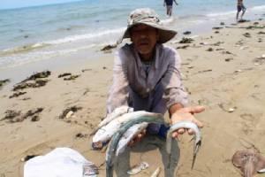 เวียดนามเร่งสืบหาสาเหตุปลาตามชายฝั่งภาคกลางเกยตื้นตายจำนวนมหาศาล