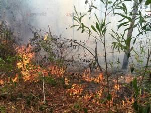 ดับยาก! ไฟไหม้ป่าพรุนราฯ เสียหายแล้ว 200 ไร่ จนท.เร่งสกัดไฟหวั่นลามเป็นวงกว้าง