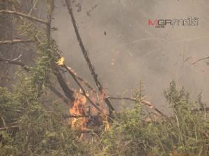 ไฟยังโหมลุกไหม้ป่าพรุต่อเนื่องใน อ.ยี่งอ จ.นราธิวาส พบเสียหายแล้วกว่า 350 ไร่