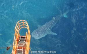 ตำรวจรวบตัวชาวประมงหลังโลกออนไลน์รุมชี้เป้าเป็นมือสังหารฉลามวาฬ