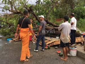 ลมฝนกระหน่ำหาดใหญ่ทำต้นสะตอยักษ์ล้มทับเพิงขายผลไม้ แม้ค้าเจ็บสาหัส 1 ราย