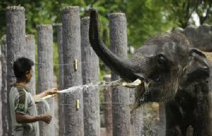 Elderly elephant named in petition drive dies in Japan zoo
