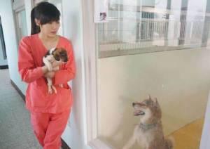 สัตวแพทย์ฆ่าตัวตาย หลังกลุ่มคนรักสัตว์ประณาม การุณยฆาตสุนัขจรจัดล้นศูนย์พักพิง