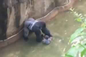 โลกออนไลน์เดือด! ประท้วงสวนสัตว์ยิงฆ่ากอริลลาช่วยหนูน้อยพลัดตกไปในกรง (ชมคลิป)