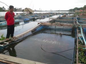 เตือนเลี้ยงปลากระชังเร่งเพิ่มออกซิเจน ฝนตกน้ำเปลี่ยนเสี่ยงน็อกตาย