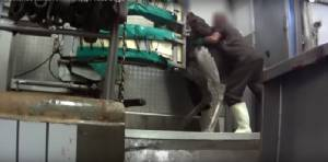 """องค์กรพิทักษ์สัตว์ PETA แฉภาพนกกระจอกเทศถูก """"ฆ่าโหด"""" ก่อนกลายเป็นกระเป๋าหรู """"แอร์เมส"""""""