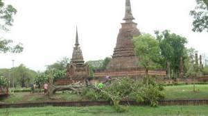พายุฝนกระหน่ำต้นไม้ในอุทยานเมืองเก่าสุโขทัยหักโค่นกว่า 100 ต้น