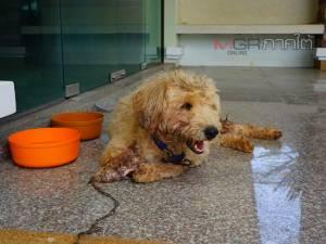 สร้างเสร็จแต่ใช้ไม่ได้! โรงพยาบาลสัตว์พัทลุงทำพลเมืองดีผิดหวังนำสุนัขรักษาแต่ไม่เปิดใช้งาน