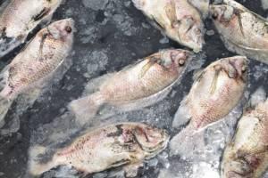 น็อกน้ำ! ปลาเลี้ยงกระชังแม่น้ำเลยตายเป็นเบือเสียหายกว่า 100 บ่อ