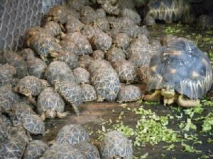 สั่งย้าย หน.สถานีเพาะเลี้ยงนกน้ำบางพระ หลังเต่ามาดากัสการ์-เต่าดาวรัศมี กว่า 70 หาย (ชมคลิป)