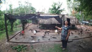 ผวา! งูหลามยักษ์โผล่เลื้อยกินไก่ชาวบ้านกลางดึก
