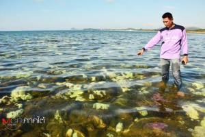 วิกฤตทะเลชุมพรพบปะการังฟอกขาวตายเกลื่อนหาด
