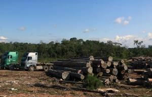 ดูคลิปนี้.. ทำไมชาวลาวแซ่ซ้องสนั่นเว็บ หนุนรัฐบาลปิดป่า-ห้ามตัดห้ามส่งออกไม้ทุกกรณี