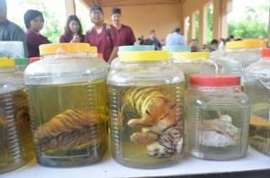 รอง ผบก.กาญจน์เรียก ตร.ประชุมแนวทางปฏิบัติงานคดีพบซากสัตว์ป่าคุ้มครองที่วัดเสือ เผย 8 คดียังไม่คืบ