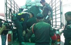รวบหนุ่มลอบขนกัญชาซุกถุงขี้วัวร่วม 600 กก.มูลค่า 18 ล้านบาท จ่อส่งขายหาดใหญ่