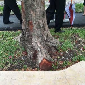 สวดยับ! กทม.หั่นราก ฉาบปูน ฆ่าต้นไม้! รอบวังสวนจิตรลดา