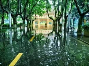 """ความงามหลังพายุ! น้ำท่วมเนรมิตมหาวิทยาลัยกลายเป็น """"ป่าในเทพนิยาย"""" (ชมภาพ)"""