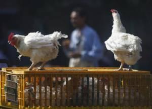 FAO ยัน  พบ ไข้หวัดนก ระบาดในแคเมอรูน ชี้ เชื้อมรณะส่อเค้าลุกลามลงสู่ตอนใต้ของแอฟริกา
