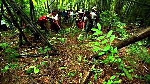 """เดินหน้าเพิ่มผืน """"ป่าชุมชน""""  กรมป่าไม้ ชูสร้างกันชนปกป้องป่าที่ยั่งยืน"""