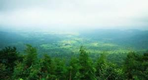 คนรุกป่า, ป่ารุกคน ที่วังน้ำเขียว