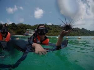 นายก ส.ท่องเที่ยวตราดจวก นทท.จีนนำหอยมือเสือและหอยเม่นใต้ทะเลเกาะช้างถ่ายภาพอวดกัน