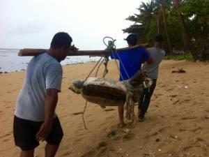 ตายอีกตัว! พบซากเต่าตนุถูกคลื่นซัดเกยหาดเกาะลันตา