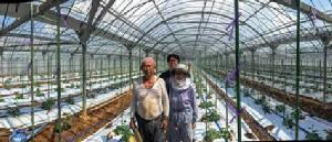 5 คำถามกับ Deep Learning: ระบบคัดแยกแตงกวาอัตโนมัติจากรูปภาพ @ฟาร์มแตงกวา ประเทศญี่ปุ่น (ตอนที่ 1/2)