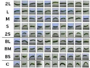 5 คำถามกับ Deep Learning: ระบบคัดแยกแตงกวาอัตโนมัติจากรูปภาพ @ฟาร์มแตงกวา ประเทศญี่ปุ่น (ตอนที่ 2/2)