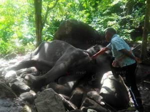 พบช้างป่าเพศเมียตาย 1 ตัว บริเวณเชิงเขาเมาแต คาดชาวบ้านยิงโดยรู้เท่าไม่ถึงการณ์