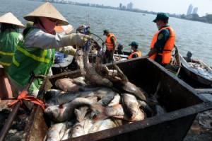 ทะเลสาบฮานอยวิกฤตปลาตายเป็นเบือ เจ้าหน้าที่เร่งกำจัดเริ่มส่งกลิ่นเหม็น