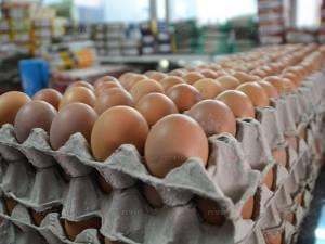 ร้านค้าในเบตงนำไข่ไก่คุณภาพดีขายถูกช่วยเกษตรกร หลังราคาตก-ล้นตลาดช่วงกินเจ