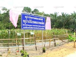 บ้านแกแม จ.นราธิวาส นำร่องหมู่บ้านวิถีเกษตรแบบพอเพียง ชาวบ้านขานรับคุณภาพชีวิตดีขึ้น