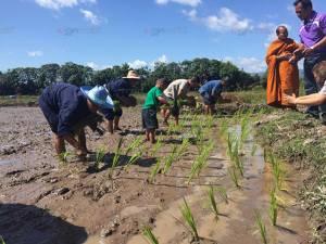 ชาวสุไหงปาดีทำพิธีแรกดำนาทุ่งปากล่อ ส่งเสริมการปลูกข้าวในพื้นที่นาร้าง