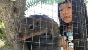 สวนสัตว์เชียงใหม่นำ 2 ลูกกระรอกเหยื่อไฟป่าดอยสุเทพออกโชว์ตัวต้อนรับปิดเทอม-พร้อมให้ นร.ร่วมประกวดตั้งชื่อชิงทุนการศึกษา