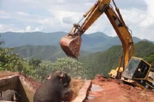 Elephants trapped in reservoir