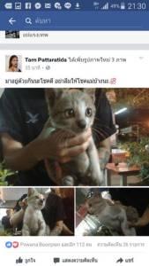 สาวโพสต์เฟซบุ๊กขอความช่วยเหลือแมวติดในรถยนต์นาน 3 วัน