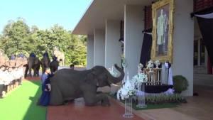 พร้อมกัน! คน-ช้าง หมอบกราบอาลัยต่อเบื้องพระบรมฉายาลักษณ์ ร.๙