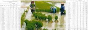 มหาดไทยโอนเงิน 72 ล้านเข้าพื้นที่ปลูกข้าว 6.2 หมื่นหมู่บ้าน