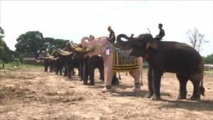 วังช้างแลเพนียดอยุธยา เตรียมนำช้างเข้าร่วมแสดงความอาลัยในหลวง