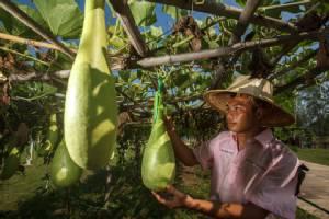 โสตศึกษาบ่มเพาะเมล็ดพันธุ์ ส่งเสริมเกษตรทฤษฎีใหม่