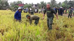 ทหารเกี่ยวข้าวช่วยชาวนาปทุมฯ ลดต้นทุนการผลิต