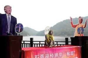 """หมอดูวานรจีนยังแม่นเหมือนเคย ทายถูกว่า """"ทรัมป์"""" คว้าชัยเลือกตั้งผู้นำสหรัฐฯ (ชมภาพ)"""