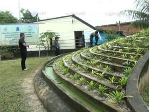 รพ.สิเกานำโครงการอันเนื่องมาจากพระราชดำริใช้แก้ปัญหาน้ำเสียจนได้ผลสำเร็จ